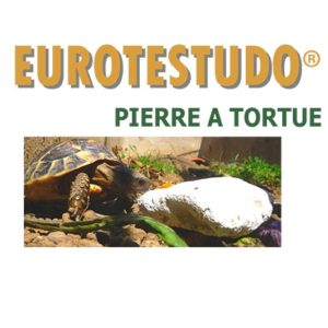 pierre_a_tortue