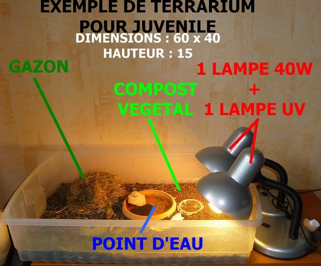 Lampe Uv Pour Tortue Hermann